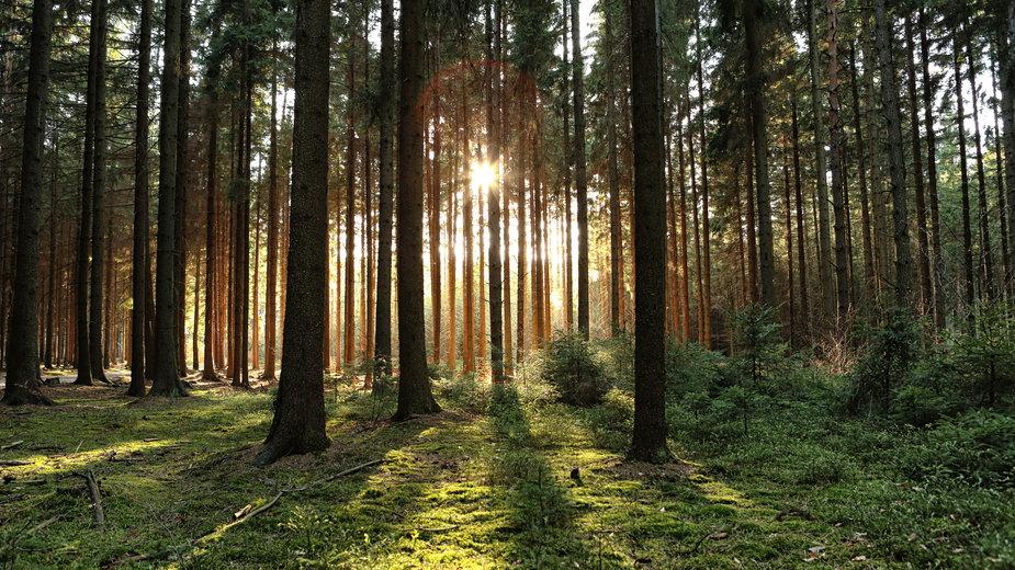 Masowa wycinka drzew w zawierciańskim lesie