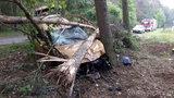 Pijany uderzył w drzewo i uciekł. Zostawił rannego pasażera