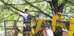 Miasta masowo wycinają drzewa