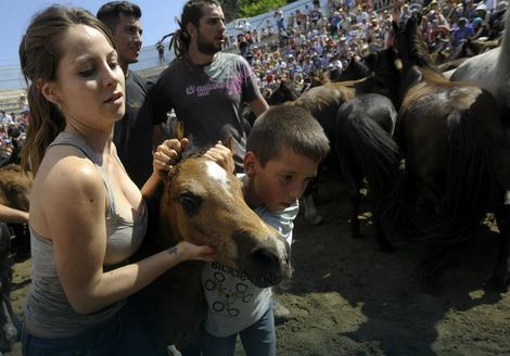 """Na hiljade ljudi dolazi u seoce Sabusedo ne bi li posmatralo """"timarenje"""" divljih konja"""