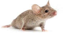 Delikatesy dla myszy już działają!