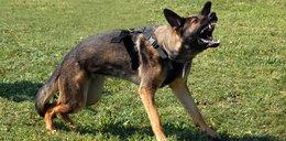 Mazowieckie: pies pogryzł 14-latkę. Dziewczynka ma rany klatki piersiowej