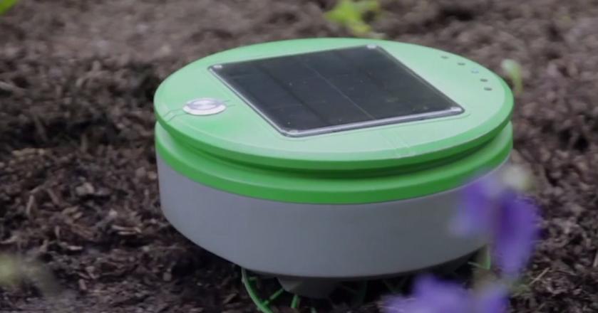 Oto Tertill - robot, który w ogrodzie sam znajdzie i wypleni chwasty