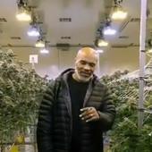 TAJSONOVO KRALJEVSTVO MARIHUANE! Bankrotirao, 200 miliona dolara NESTALO - danas živi od prodaje ove droge, otkrio i koliko zarađuje! /VIDEO/