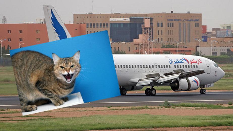 Kot w samolocie