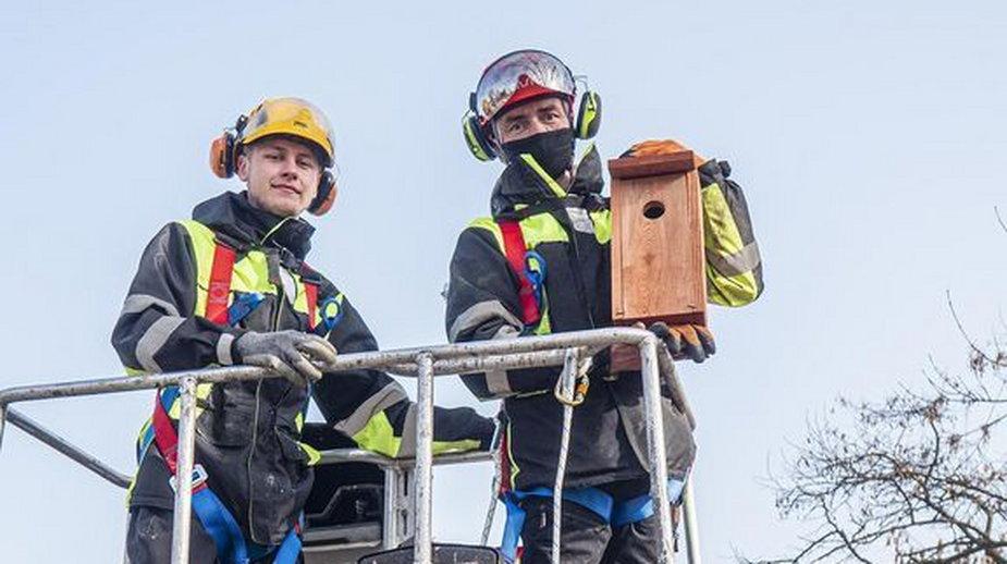 Łódź zaprasza ptaki. W całym mieście powieszą 600 budek lęgowych