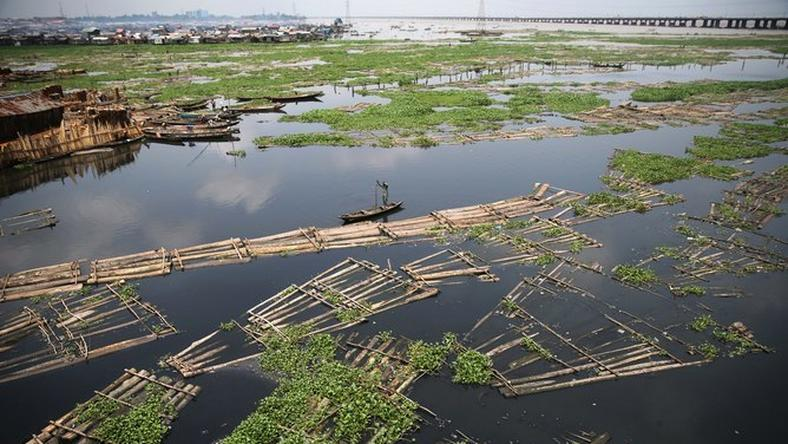 A raft of logs in the Lagos lagoon where wood, a form of biomass, is the sole source of energy for many who don't have access to power.