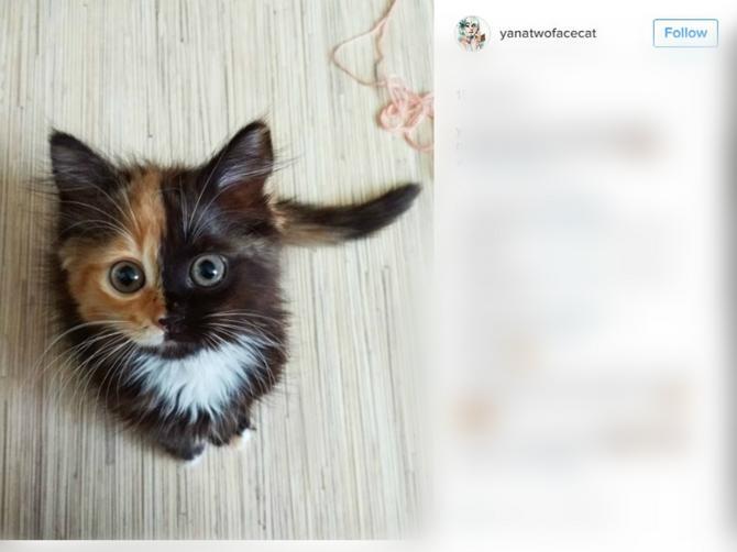 Maca Jana osvojila Instagram