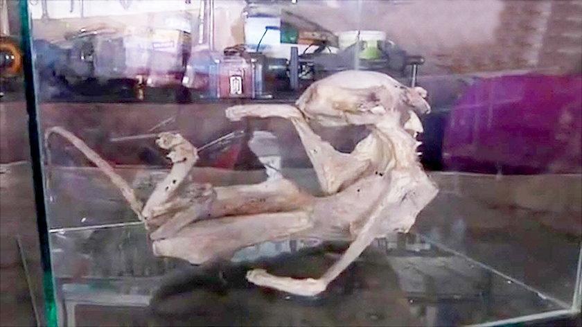 Znaleźli szkielet nieznanej istoty