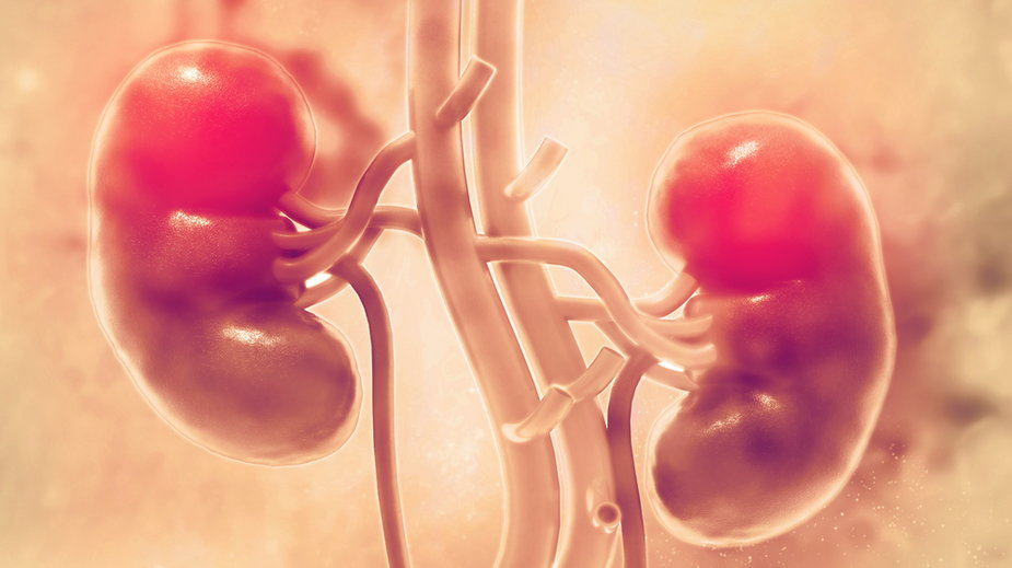 Siedem narządów, bez których da się żyć