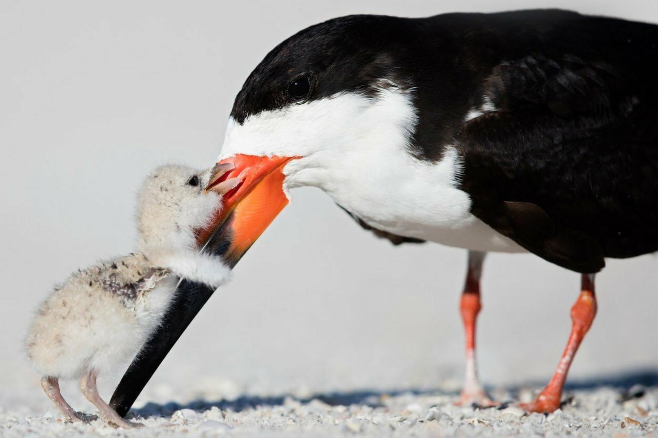Ptičija ljubav