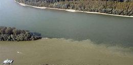 Trucizna płynie Dunajem. Zdjęcia