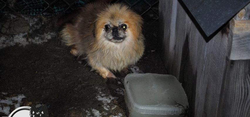 """Psy brodziły we własnych odchodach w """"trumnach"""" bez dostępu do wody i światła. Właścicielka pseudohodowli prawomocnie skazana. Sąd był dla niej łaskawy?"""
