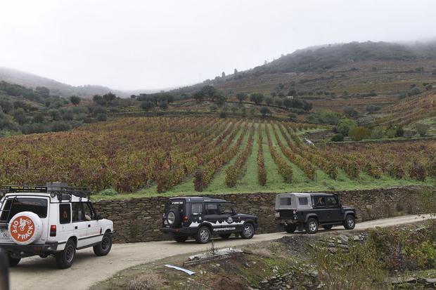 Winnice w okolicy Porto