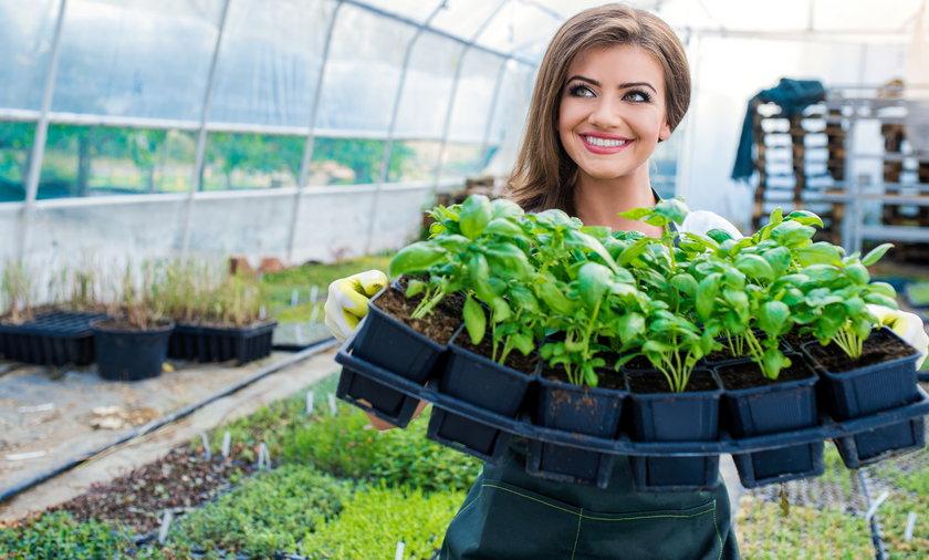 Kupując zioła zwracaj uwagę na kraj ich pochodzenia, wypieraj te od lokalnych producentów