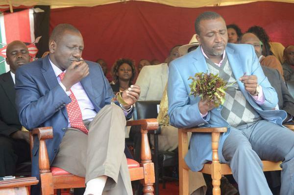 Deputy President William Ruto and Meru County Senator, Mithika Linturi chewing muguka.