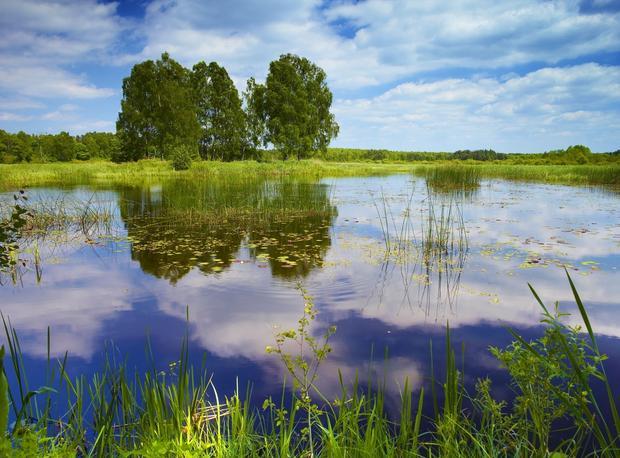 "Park Krajobrazowy ""Lasy Nad Górną Liswartą"""