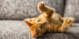 To potwór! 27-latek adoptował koty i mordował je z zimną krwią. Jednego wyprał w pralce