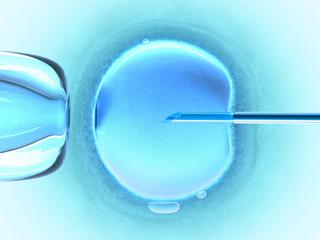 Ovum Cold Color (in vitro fertilization)