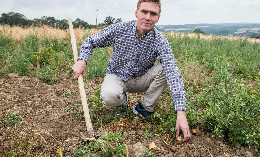 Dziki zniszczyły uprawy rolnikowi z Barwałdu Średniego
