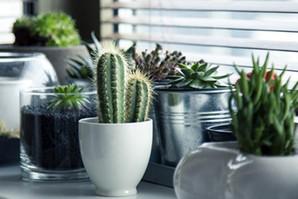 Četiri znaka da vaše sobne biljke venu i kako da to sprečite