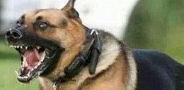 Policyjny pies uciekł z komendy i pogryzł kobietę