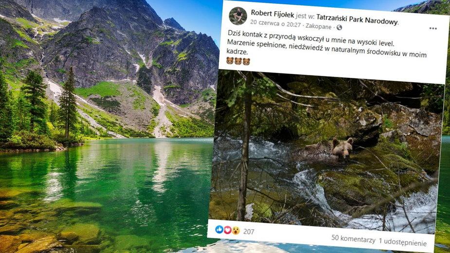 Niecodzienny widok w Tatrach. Niedźwiedź chłodził się w strumieniu