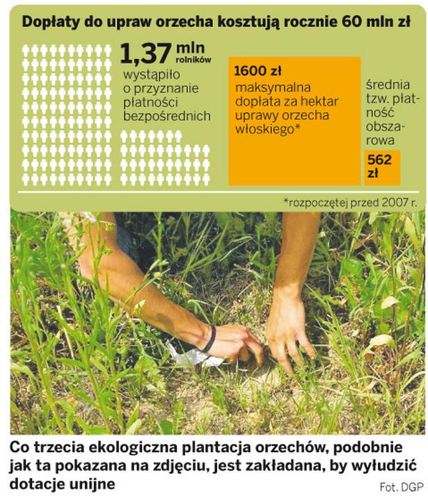 Dopłaty do upraw orzecha kosztują rocznie 60 mln zł