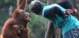 Małpa i człowiek się dogadali