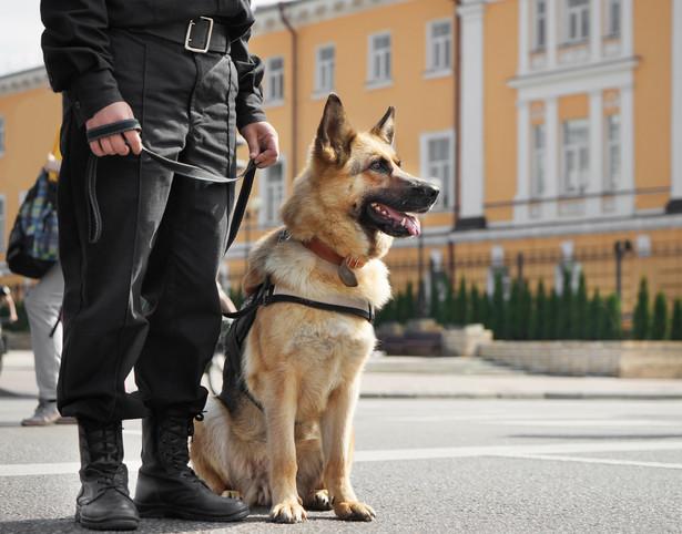 Rząd chce, aby opiekun emerytowanego psa lub konia otrzymywał co miesiąc ryczałt z tytułu zwrotu kosztów jego wyżywienia.