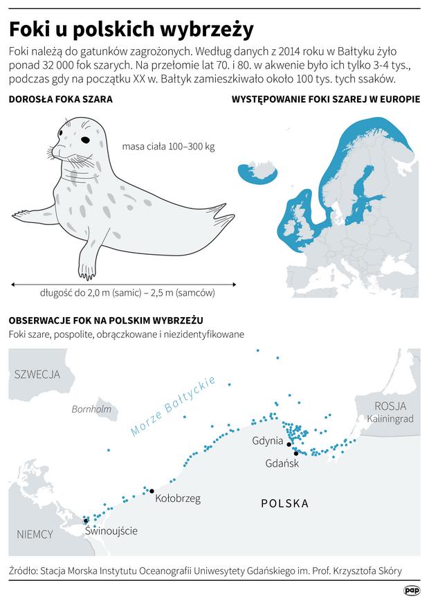 Foki u polskich wybrzeży