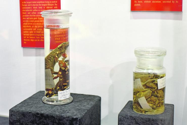prirodnjački muzej izlozba pazi otrovno_220918_RAS foto Snezana Krstic58