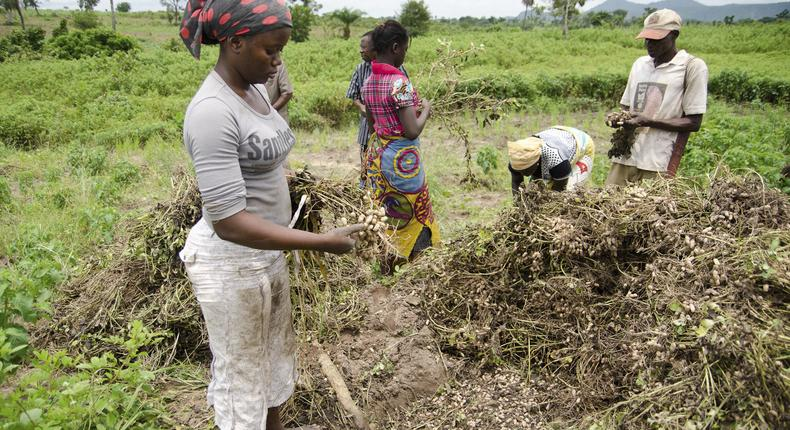 10,000 farmers in Kaduna are set to benefit form a World Bank as a result of partnership between the state and the institution [blogs]
