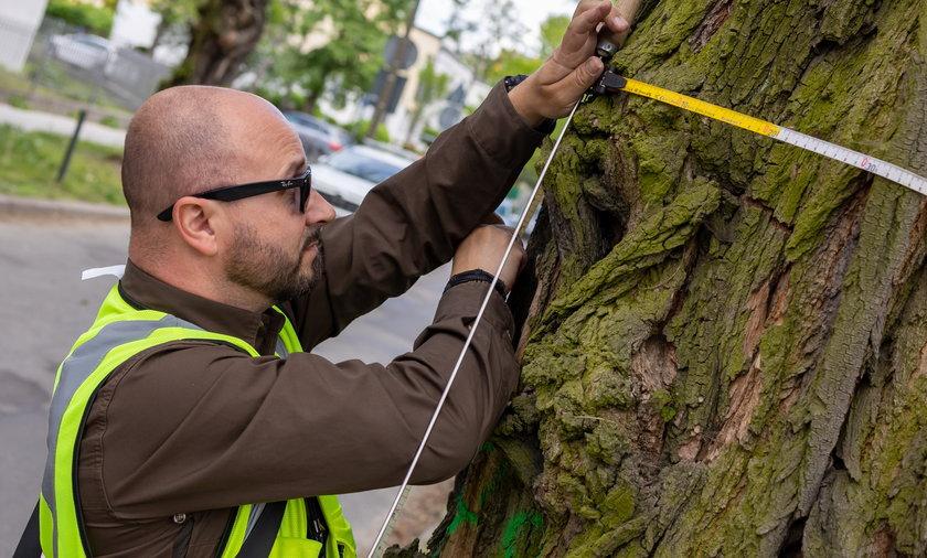 Badanie drzew w Poznaniu.