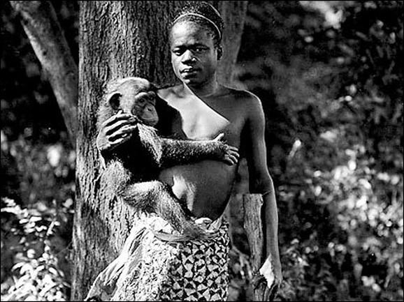 Kongoanac izložen u Bronksu
