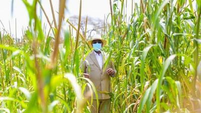 Equipement agricole : Macky facilite l'outillage des femmes et des jeunes