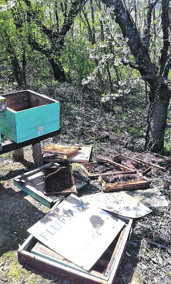 Ne mogu da odole hrani na koju naiđu, pa su tako zabeleženi i polomljeni pčelinjaci