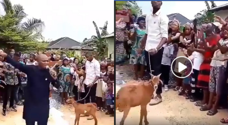 Pastor and church members pray to God through a goat (video)