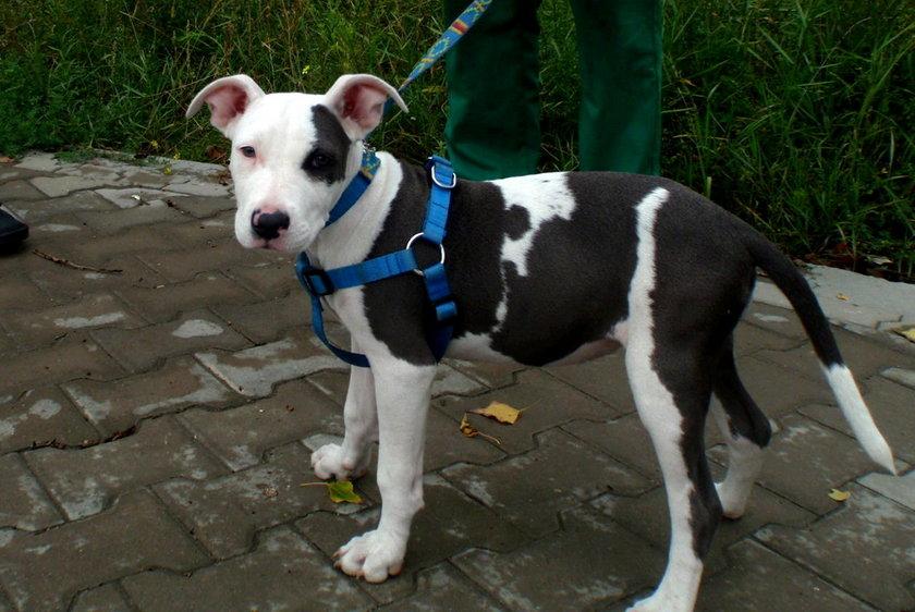 Pies porzucony w Poznaniu