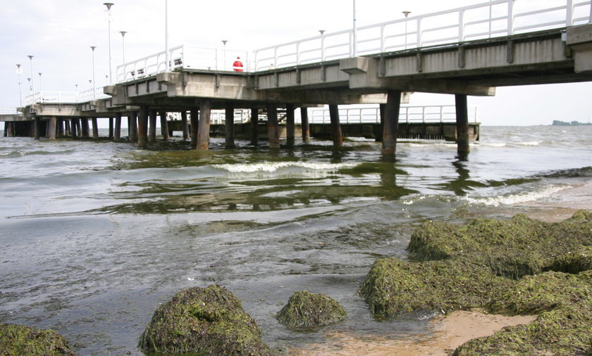 Sinice na bałtyckiej plaży.