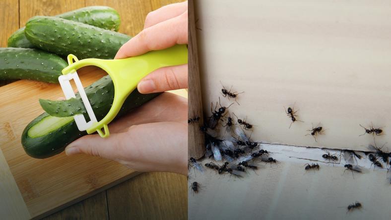 Genialny Sposób By Na Zawsze Pozbyć Się Mrówek Z Domu I