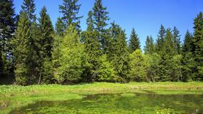 Jak powstały malownicze Jeziorka Duszatyńskie w Bieszczadach