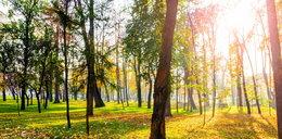 Ekonomista z Warszawy policzył, ile warte są drzewa w mieście! Kwoty robią wrażenie