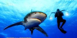 Arcytrudna misja: rekiny w obronie. Dlaczego rekinów nie można zabijać?