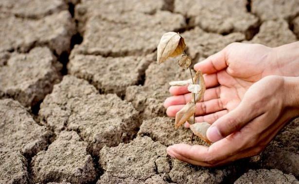 Naukowcy ustalili, że nasilające się od 2015 roku susze są zjawiskiem bez precedensu
