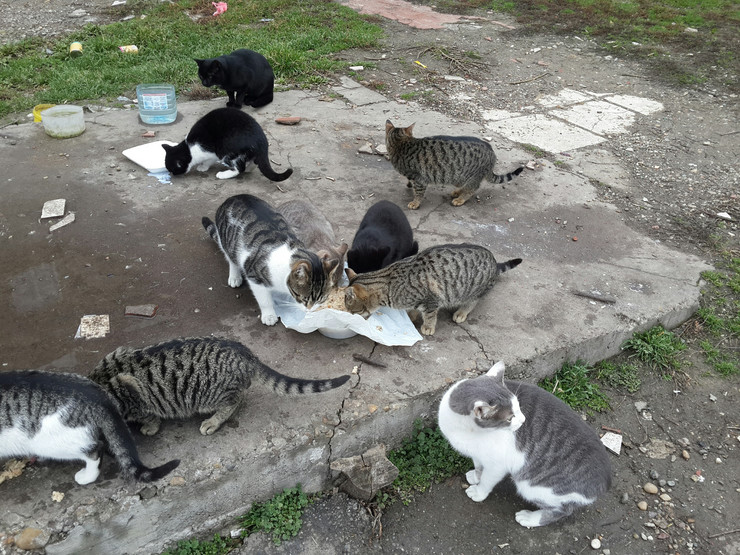 mačke koje jedu
