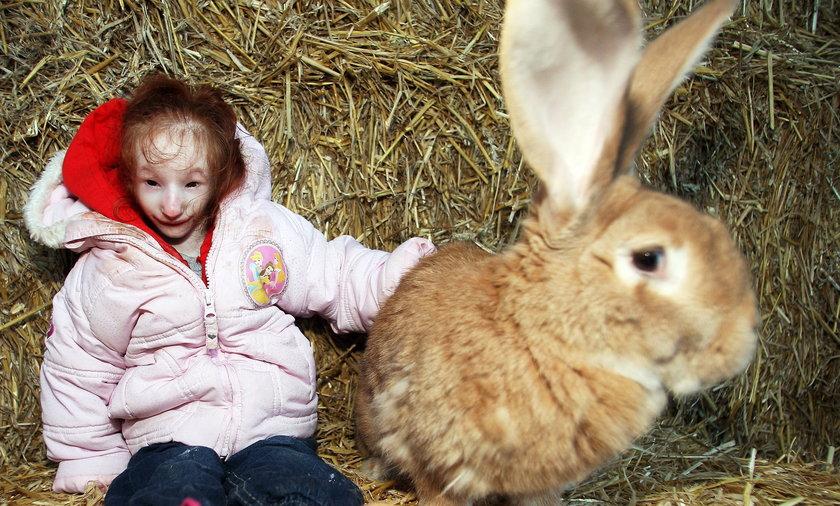 Najmniejsza 6 latka na świecie z największym królikiem
