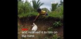 Kaczka pomogła małemu chłopcu. Zaskakujące wideo!