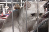 Mrnjau festival Dom omladine udomljavanje mačke