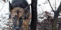 Przywiązanego do drzewa psa uratował...pies